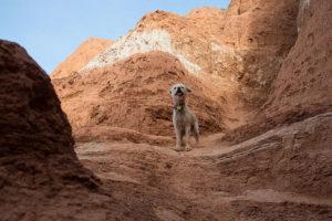 dog standing on rock at Big Bend National Park